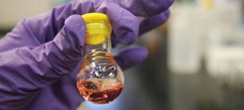 Thayumanavan lab nanogels2